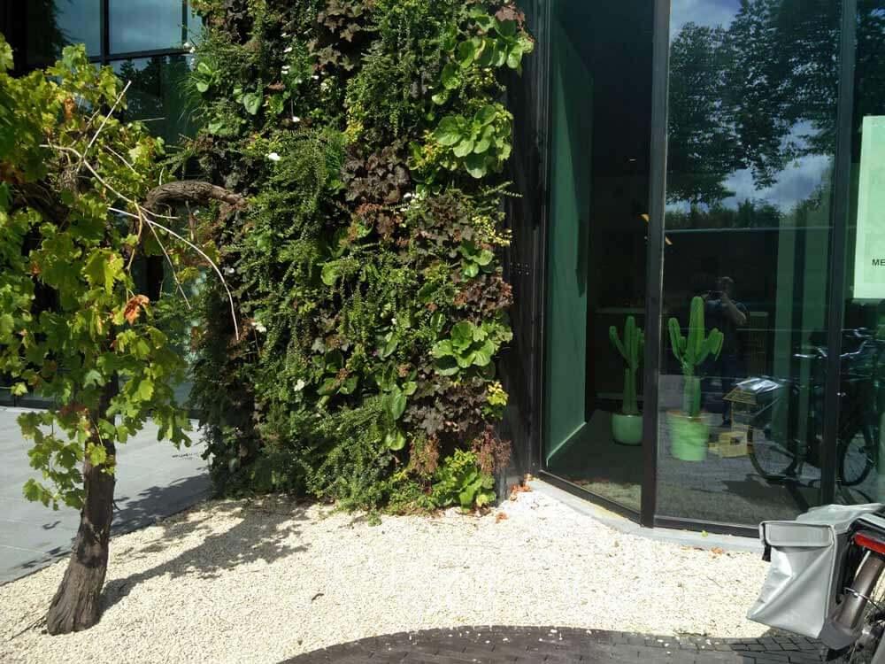 Pareti verticali nordestprati vendita prato in zolla e for Pareti verdi verticali