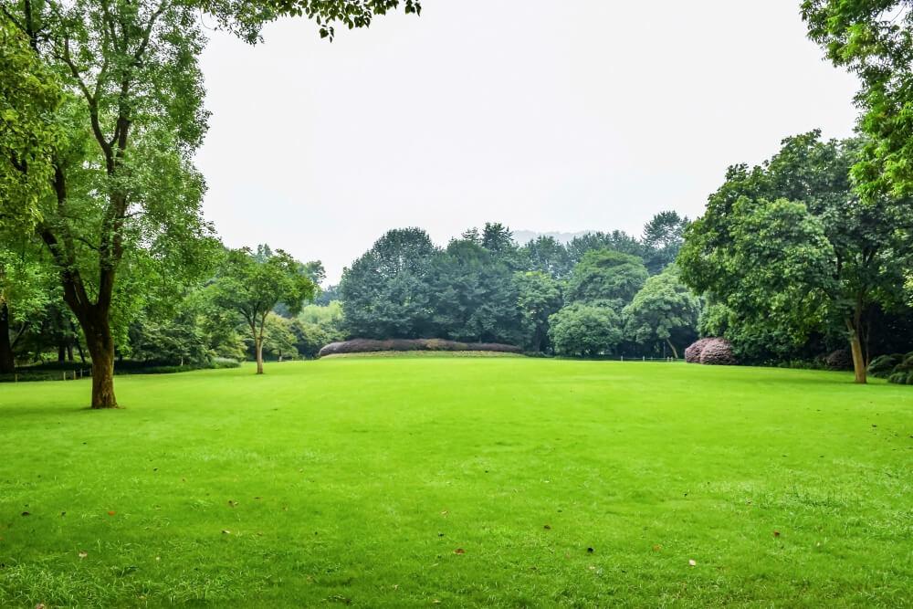 Prato verde con alberi